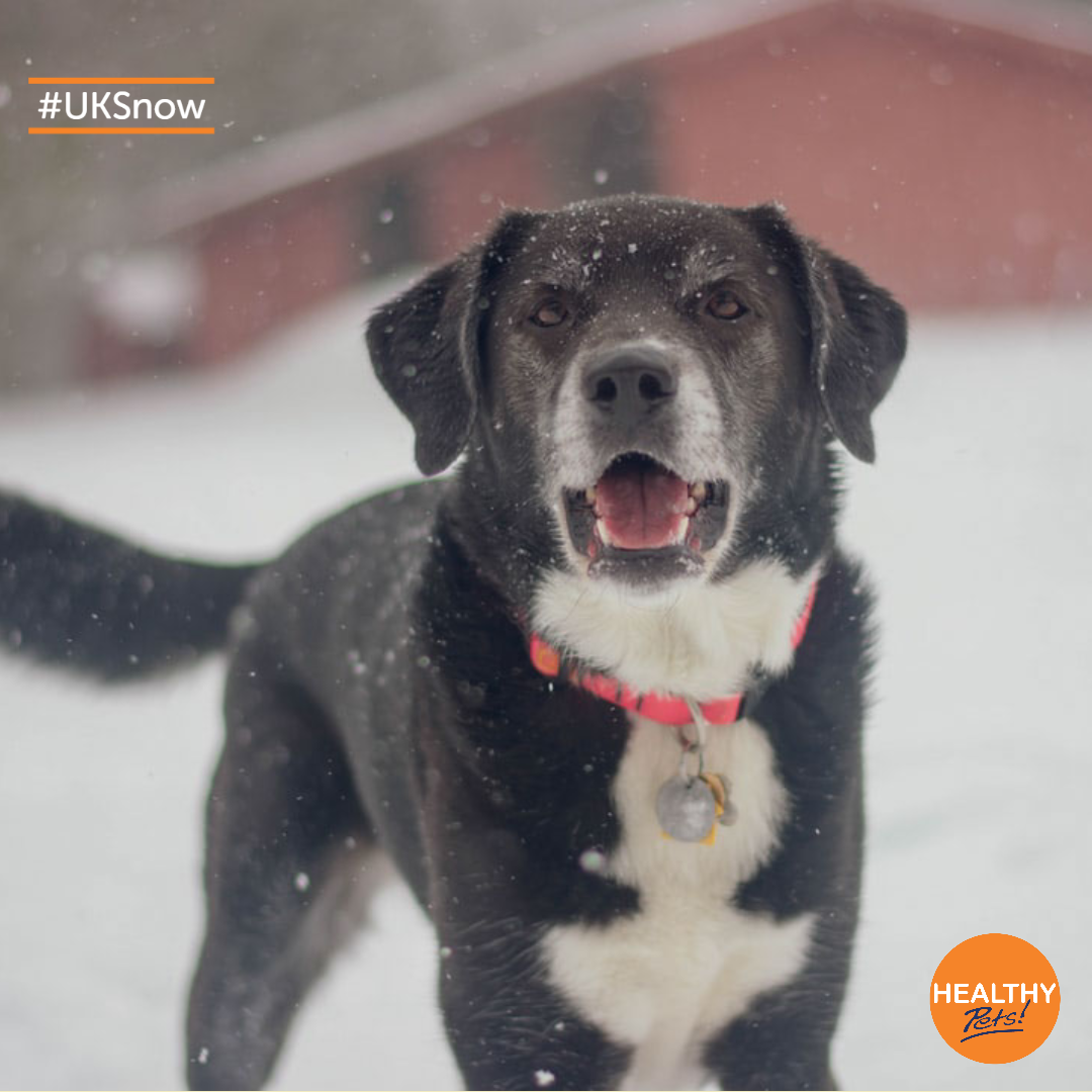 Have You Been Hit By Snow This Week Read Our Guide For Keeping Your Pet Safe In The Colder Mont In 2020 Dog Training Techniques Dog Training Leads Online Dog Training