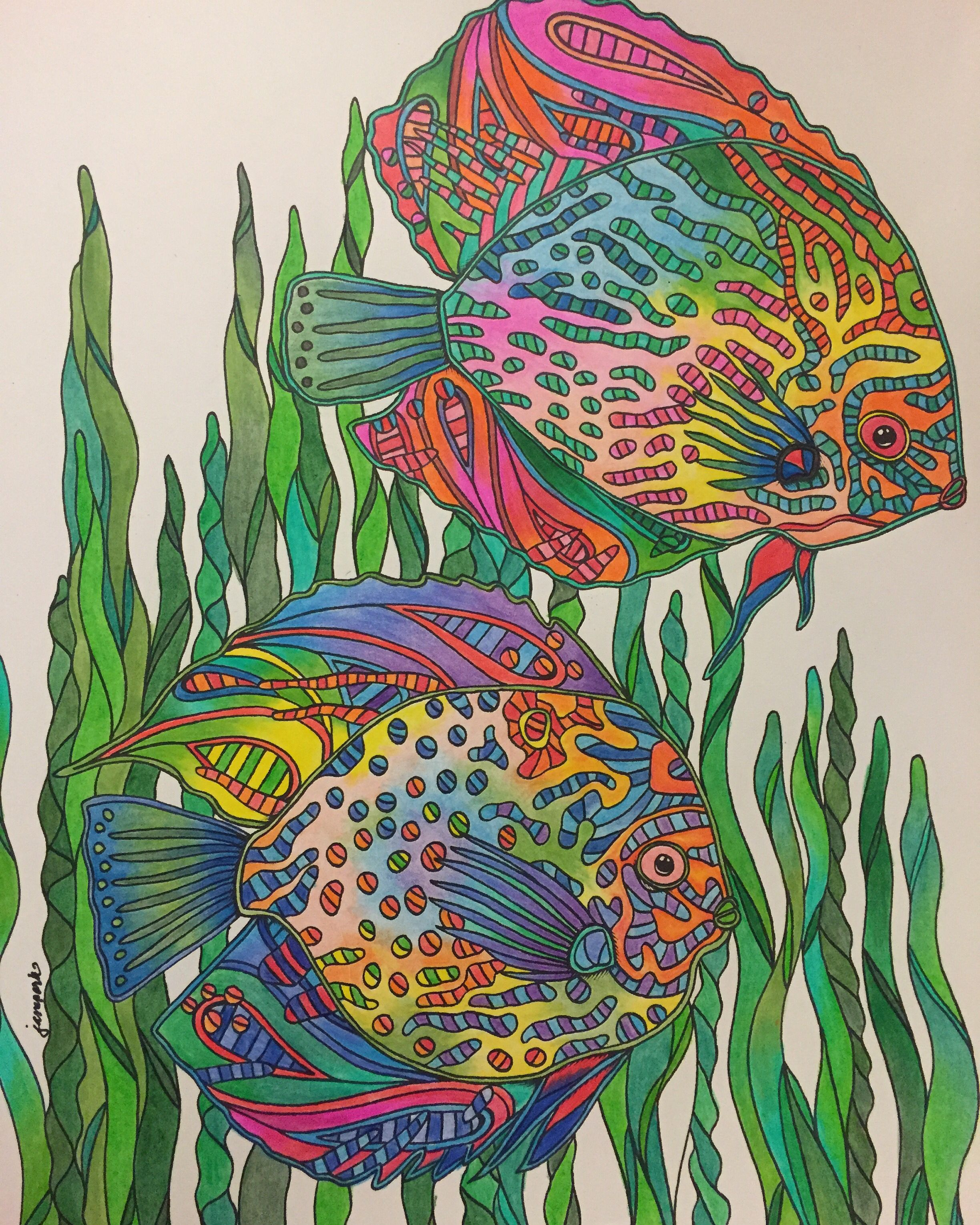 Art therapy coloring book and pencils - Waterlife Coloring Book By Georgie Woolridge Blue Discus