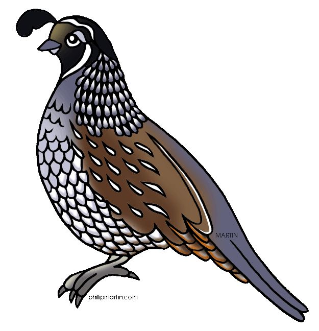 image from http images clipartpanda com valley clipart rh pinterest co uk clip art of quail quail silhouette clip art