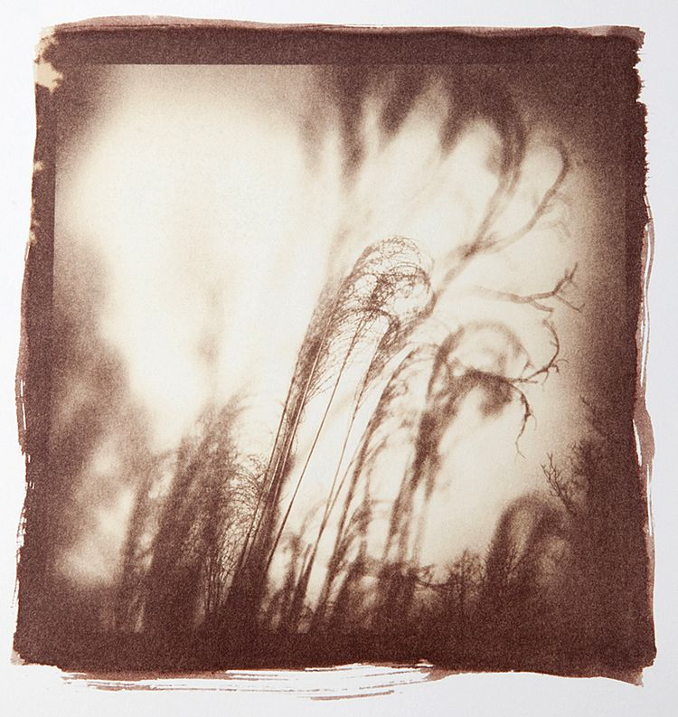 Fine Art Photography Alternative Process Paint Photography