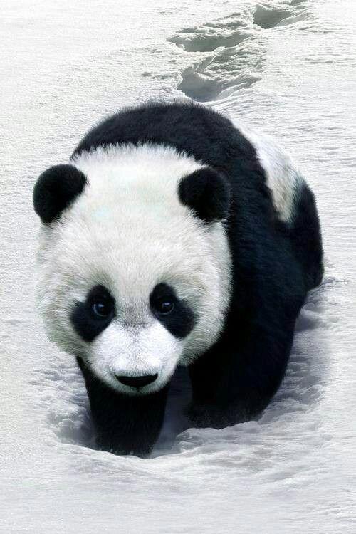 Pin Von Kim Pence Auf Animals Ausgestopftes Tier Wilde Tiere Tiere