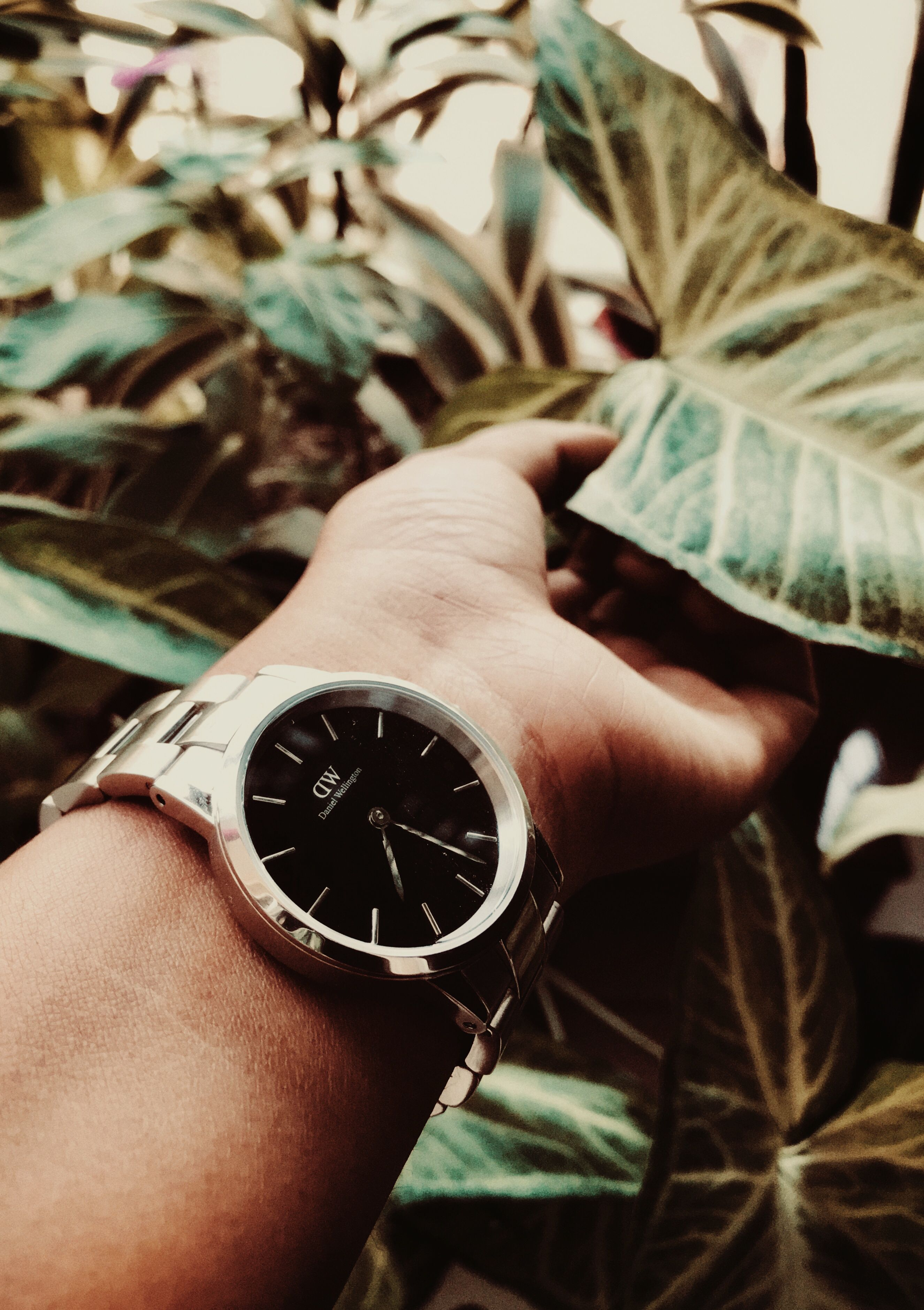 Daniel wellington dw watch mesh strap watch watches