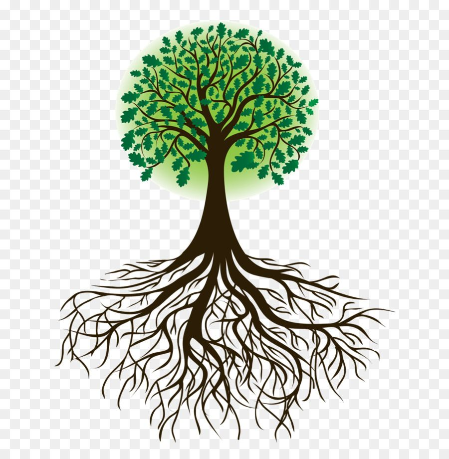 Root Tree Drawing Clip Art Root Png Is About Is About Plant Root Tree Woody Plant Branch Root Tree Dr Oak Tree Drawings Family Tree Drawing Tree Drawing