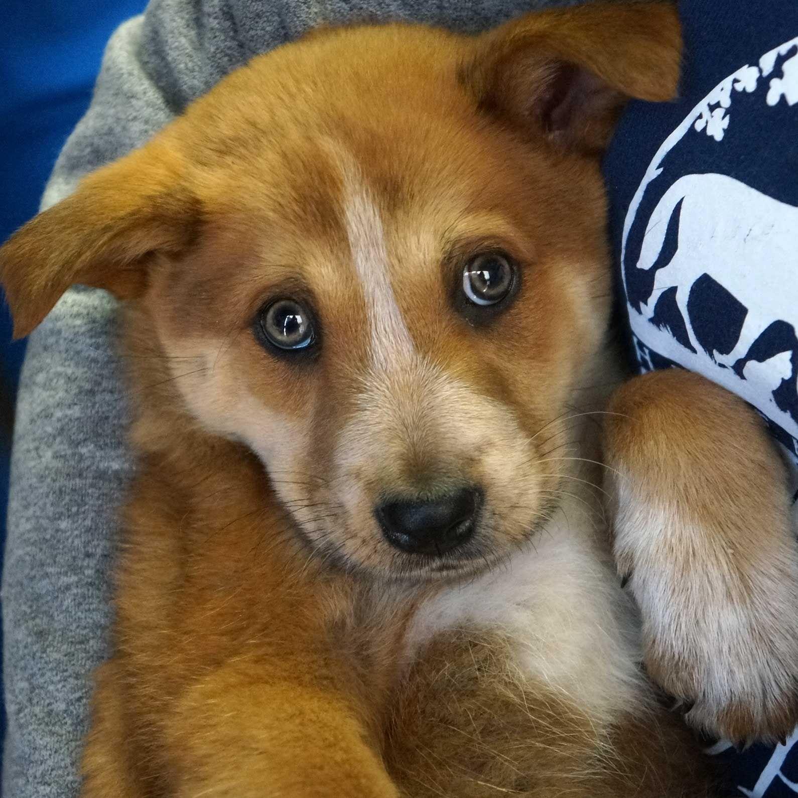 Adopt a Pet Dog adoption, Animals, Pet adoption