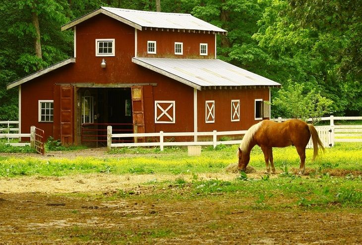 Horse Barn Design Essential Things that to be taken into