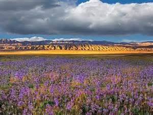 Spring Color Carrizo Plain National Monument California wallpapers and ...