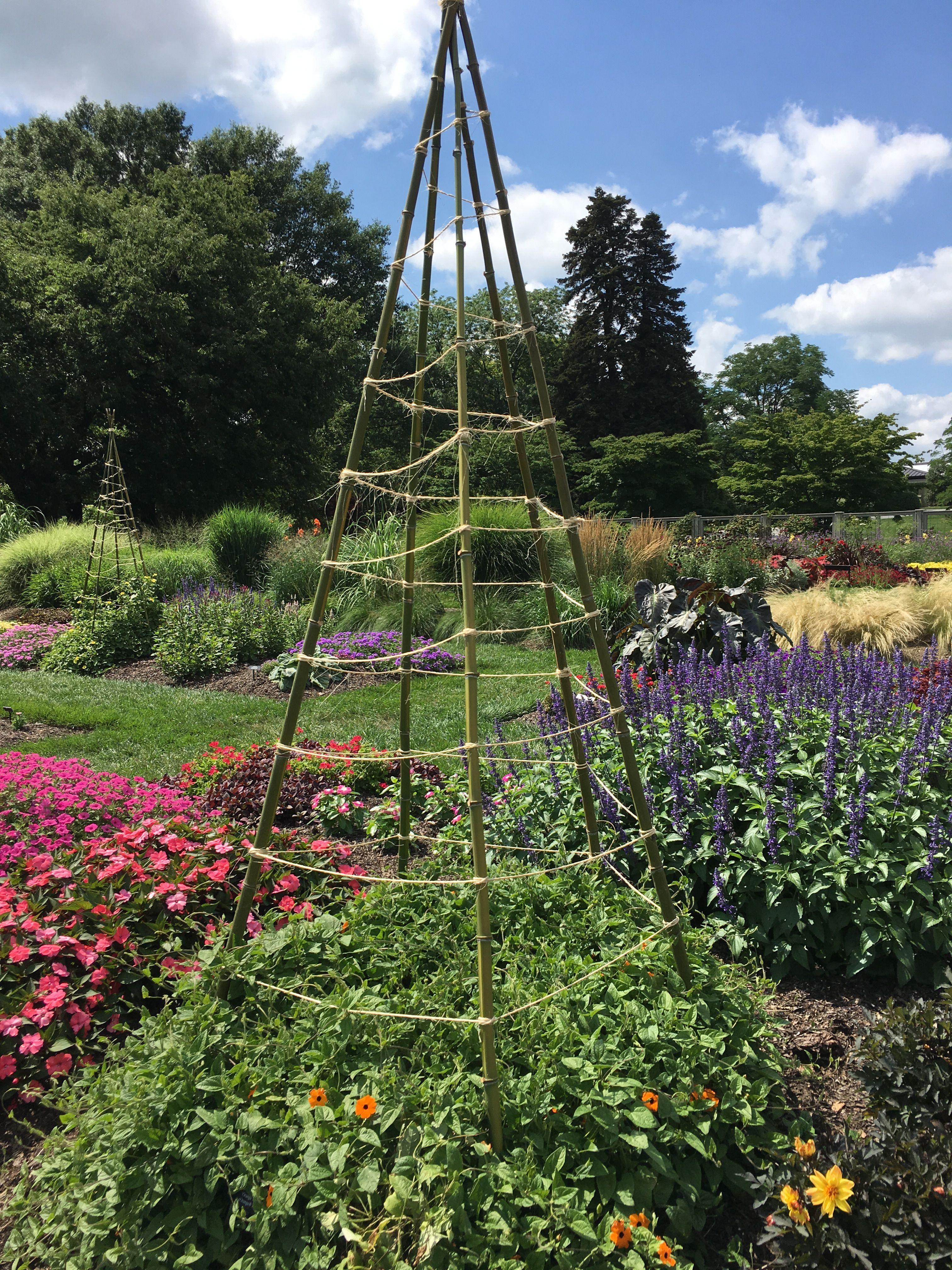Teepee Vine Support. Longwood Gardens.