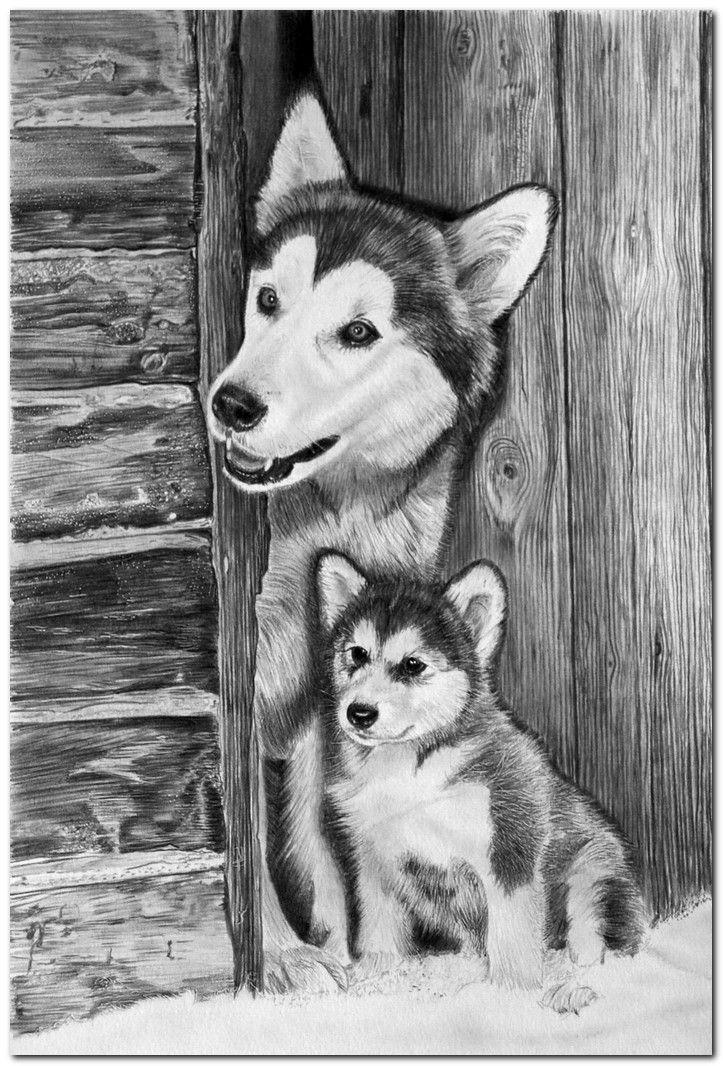 Kreslenie Ceruzkou Obrazky Hľadat Googlom Kreslenie Zvierata