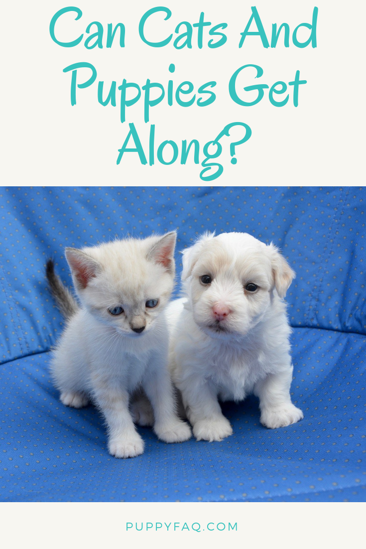 Can Cats And Puppies Get Along? Puppies, Cats, Cat facts