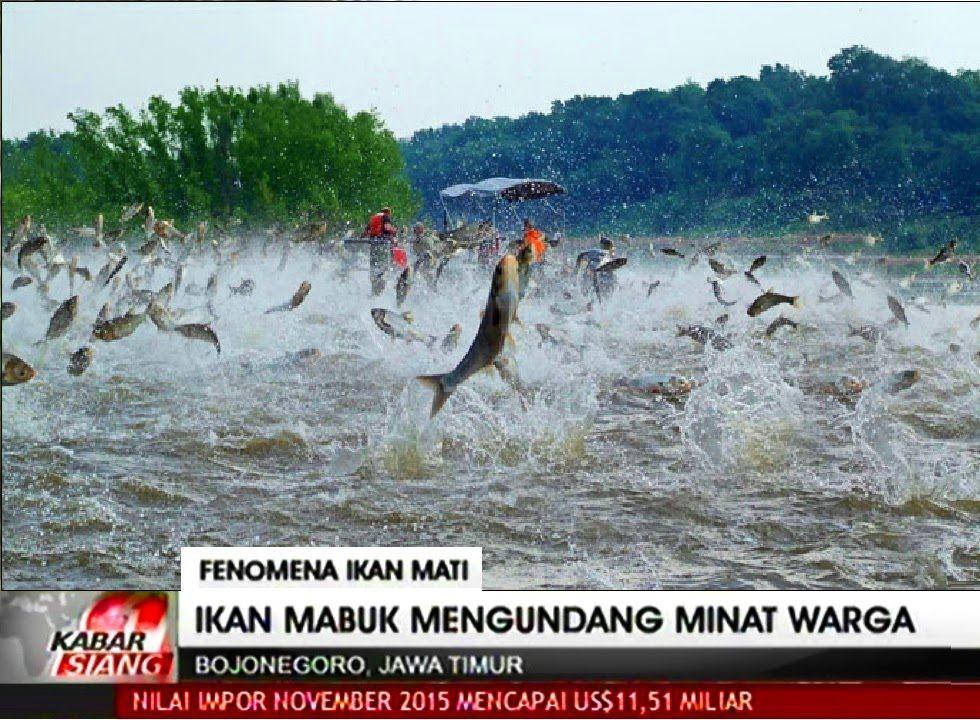 Yt O8fbix2f6aa Penampakan Naga Di Bintara - navigatingyourmove.co ...