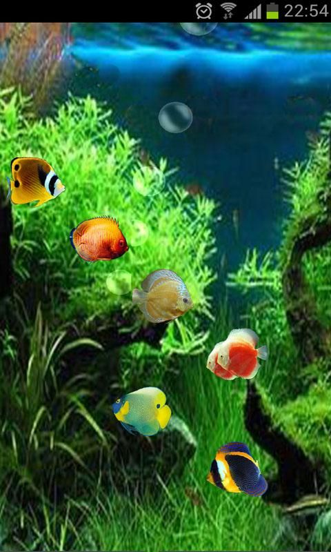 3d Moving Wallpaper For Android Mobile Group Pictures 49 In 2020 Moving Wallpapers Live Fish Wallpaper Fish Wallpaper