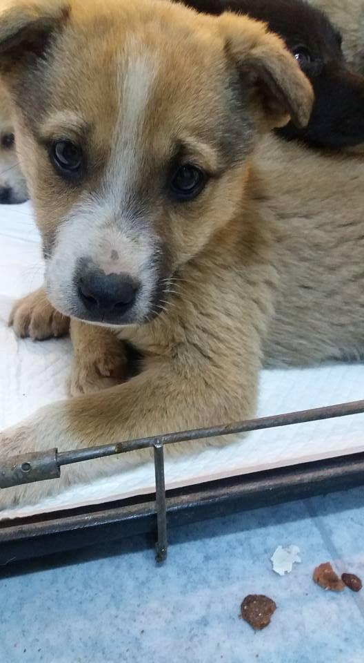 Pin Auf Hunde In Not Suchen Ein Zuhause Hundevermittlung Aus Rumanien