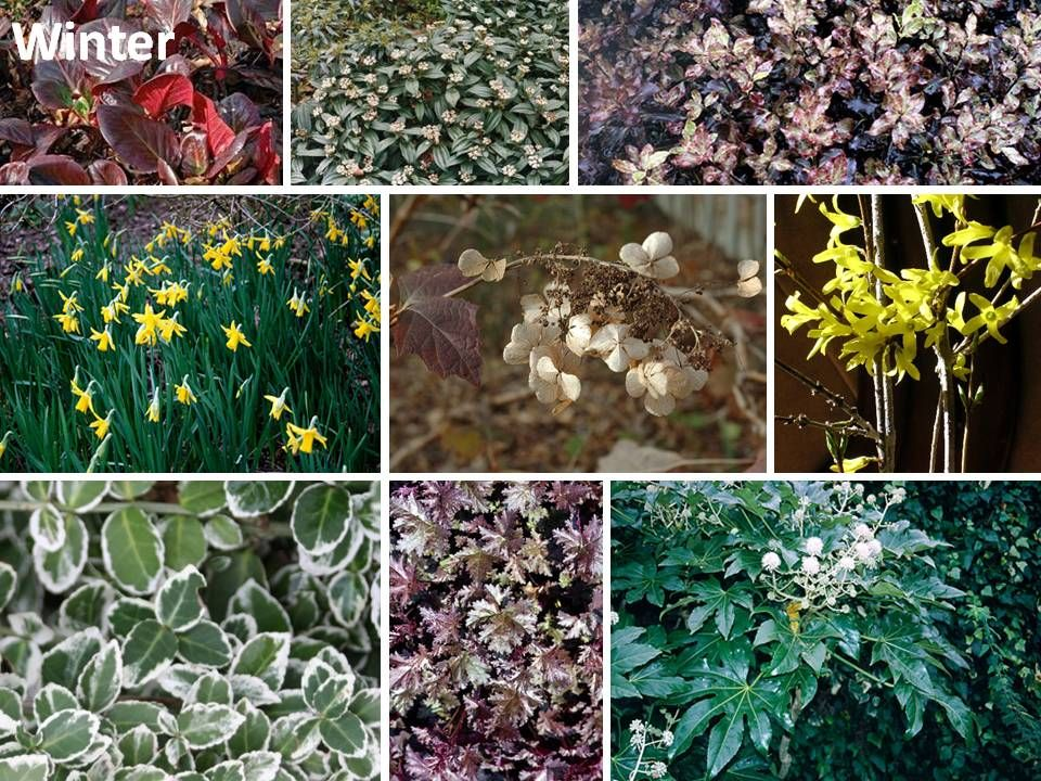 From The Drawing Board Planting Design Presentation For Client In Ashtead With Images Plants Plant Design Winter Plants
