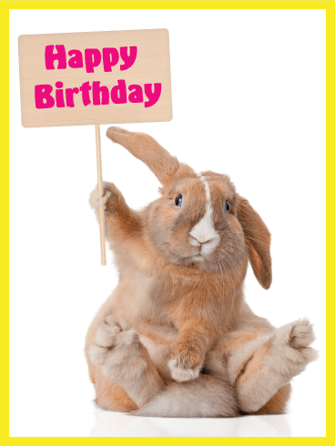 We Know This Fluffy Bunny Wants To Say Happy Birthday Everyone Year And Who Doesnt Want A Special Greeting Card