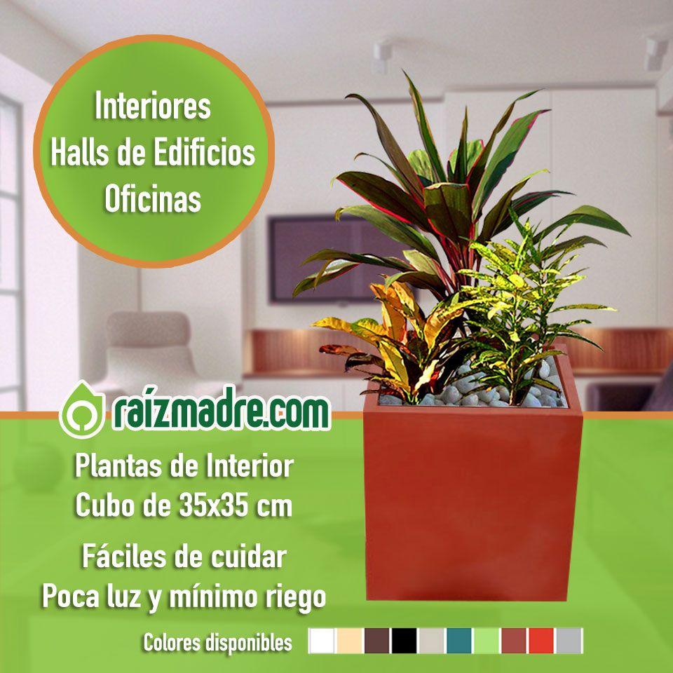 Mix Plantas de Interior + Cubo Tres plantas de interior (1 Dracena ...