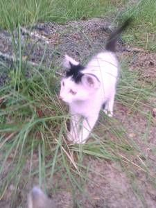 Dothan Al Pets Craigslist Cute Animals Pets White Kittens