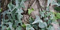Pin On Jd S Garden Tips Advice Ideas