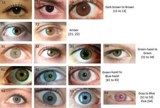 Green Eye Color Chart