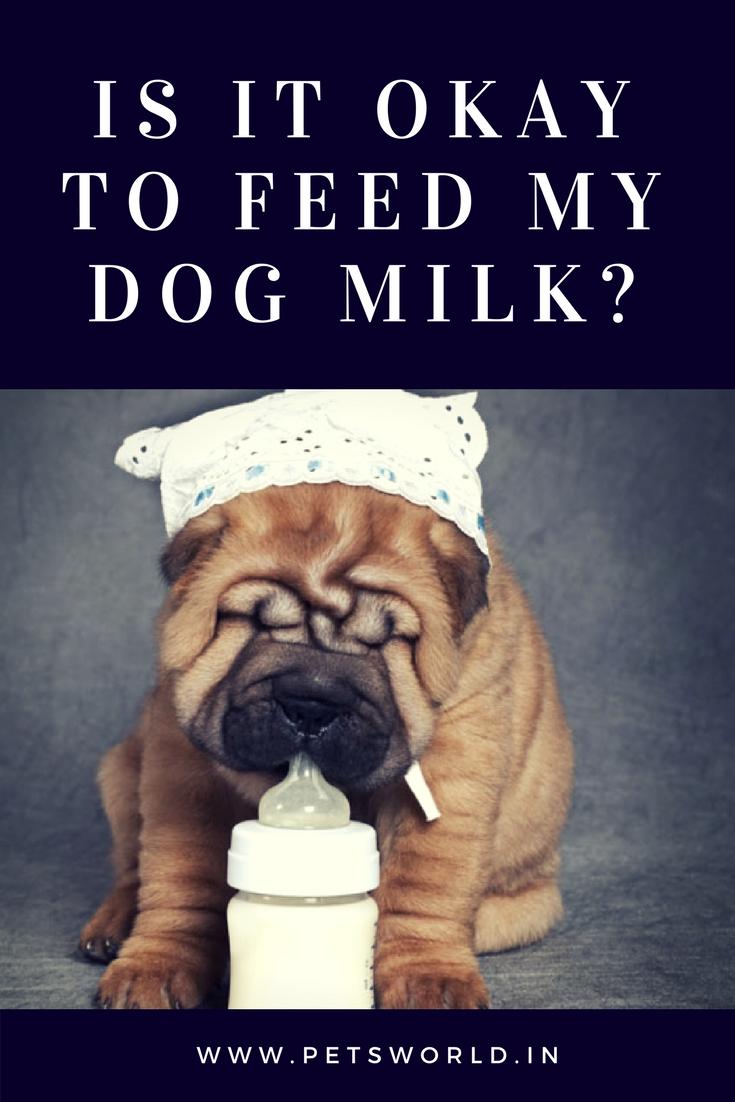 Can Dogs Drink Milk With Images Mastiff Puppies Dog Milk Mastiffs