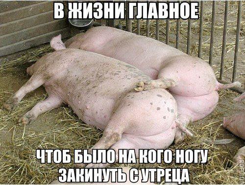 Сидя за компом ;) | Смешно, Смешные фото, Животные
