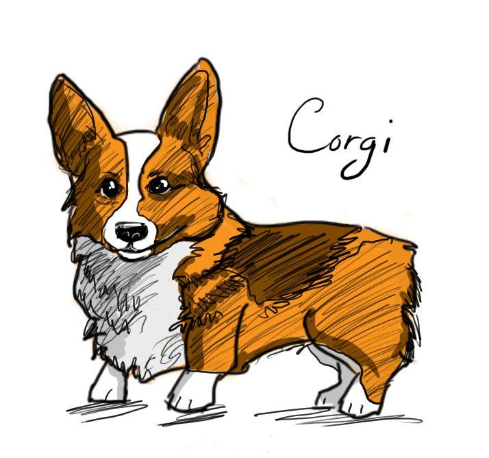 Corgi Sketch by Elliste.deviantart.com on @deviantART