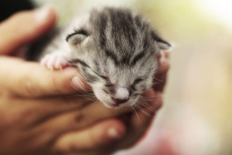 Understanding And Preventing Fading Kitten Syndrome Newborn Kittens Sick Kitten Kitten Care