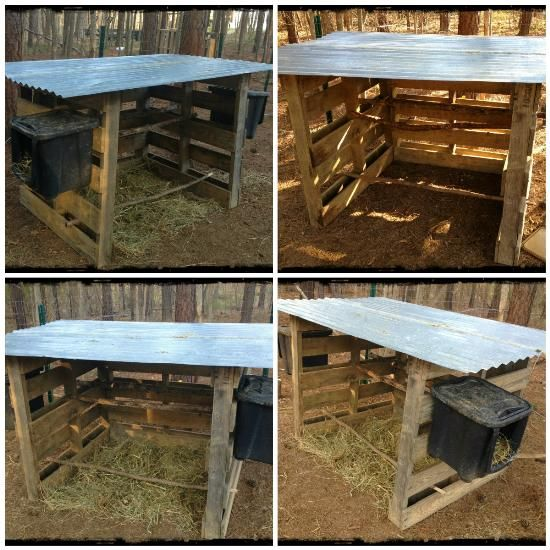 free diy chicken coop homestead redhead blog grit magazine