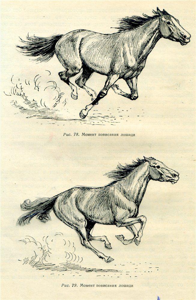 Как рисовать лошадь... | Animals anatomy | Pinterest | Horse, Horse ...