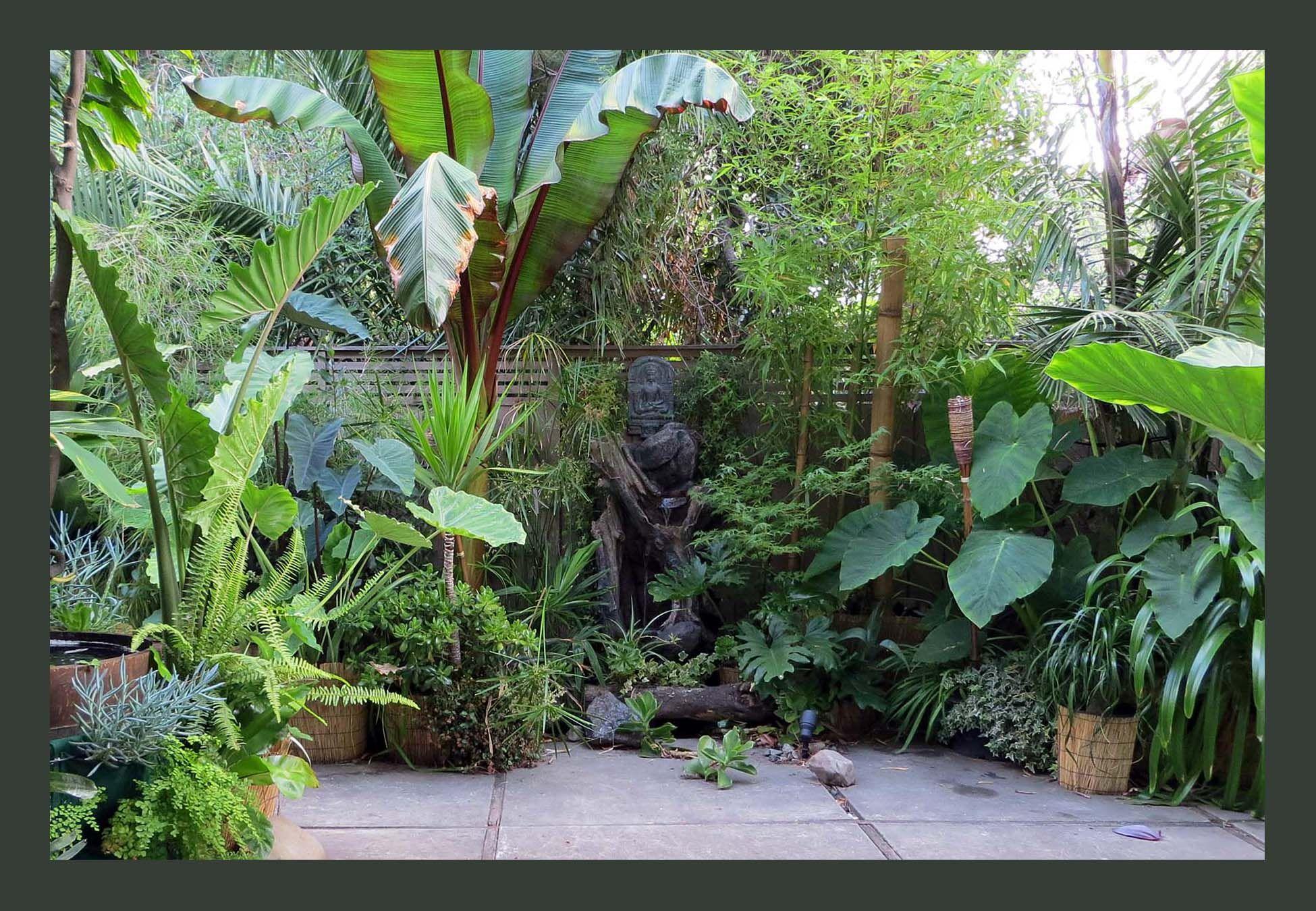 tropical garden in California | Small tropical gardens ...