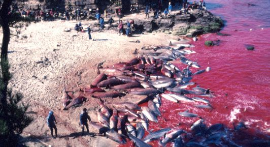 Dolphin Slaughter In Taiji. If you go to Sea World, you support this.