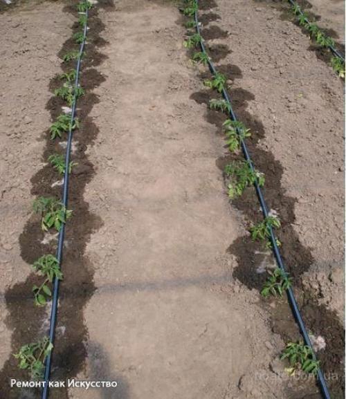 gardening gifts #GardeningTips | Vegetable garden design ...