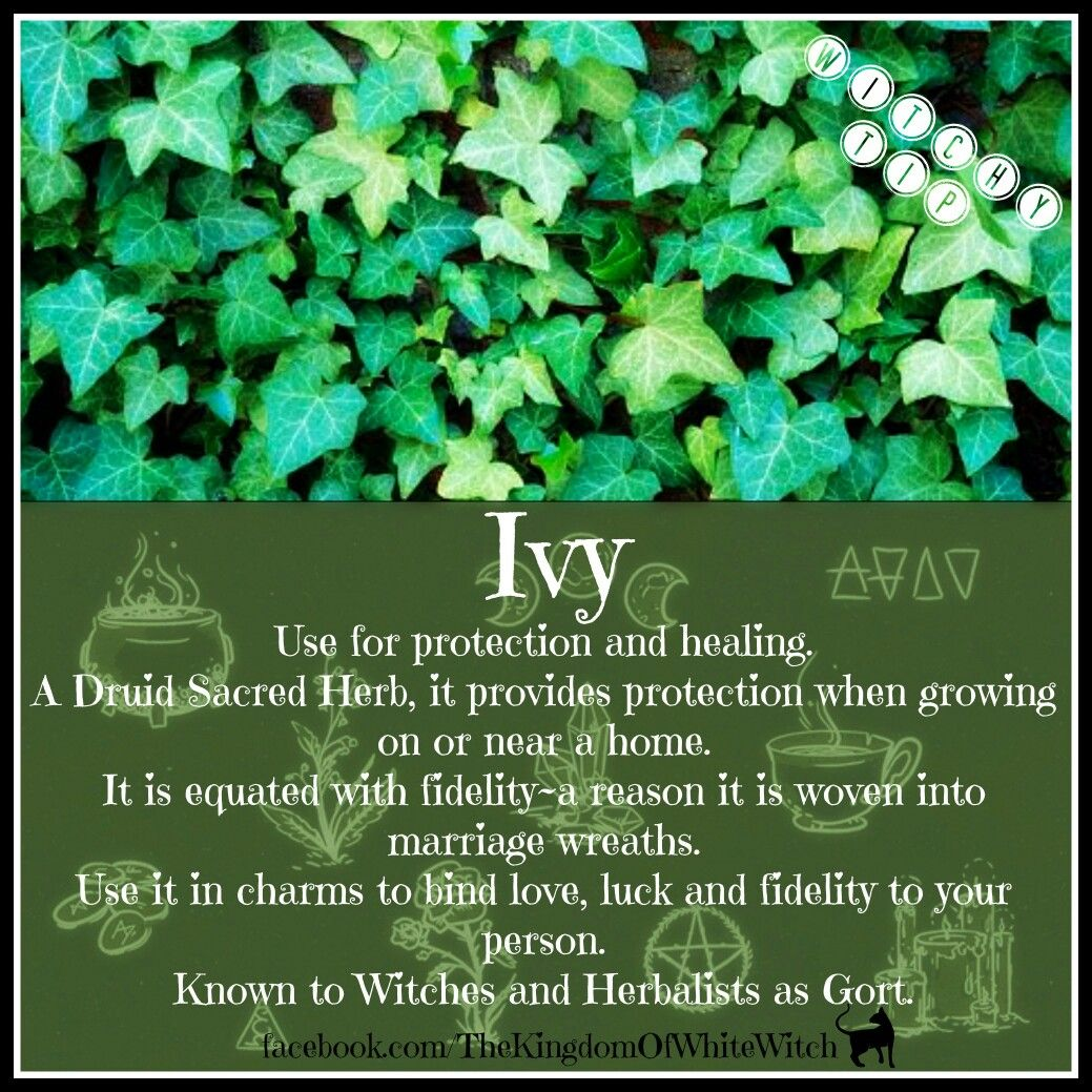 Ivy magic earth magick pinterest white witch magick and herbs ivy magic biocorpaavc Gallery