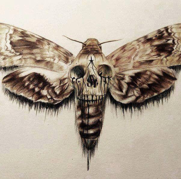 Death head moth papillon pinterest tatouages papillon et c t sombre - Invasion papillon de nuit ...