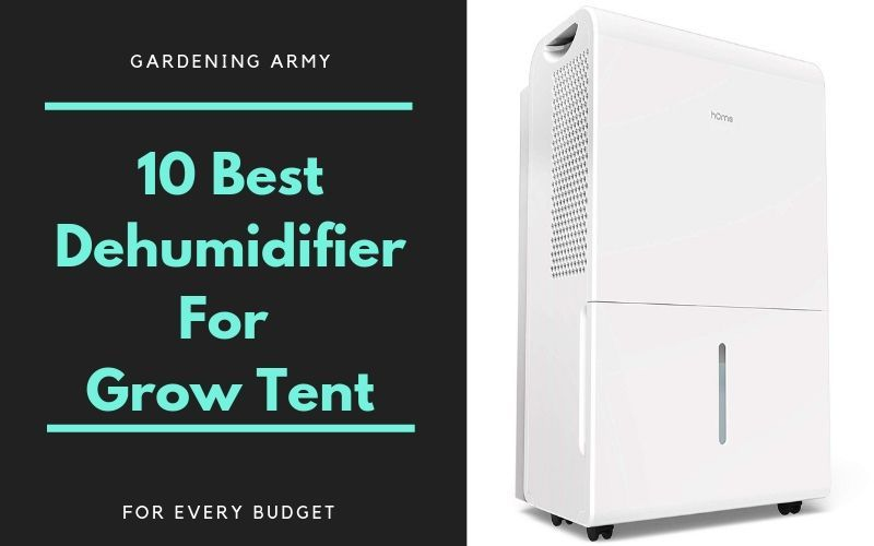 10 Best Dehumidifier For Grow Tent Room For Every Budget Grow Tent Tent Room Dehumidifiers