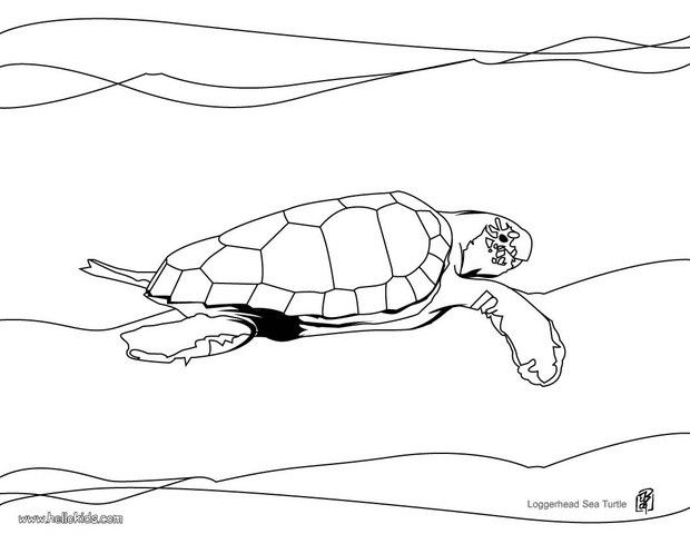 Turtle Coloring Pages Loggerhead Sea Turtle Turtle Coloring