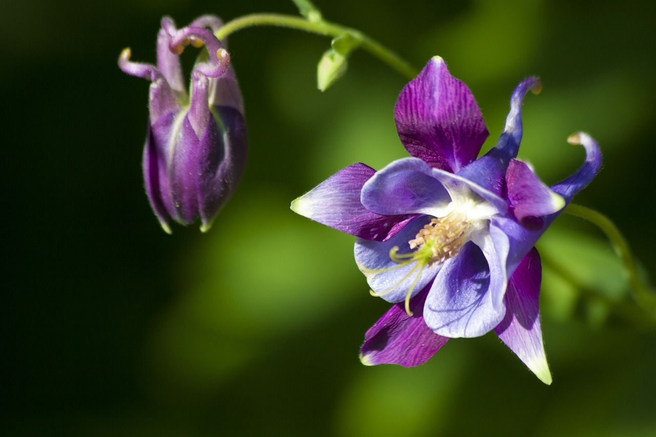 Pin On Wildflowers
