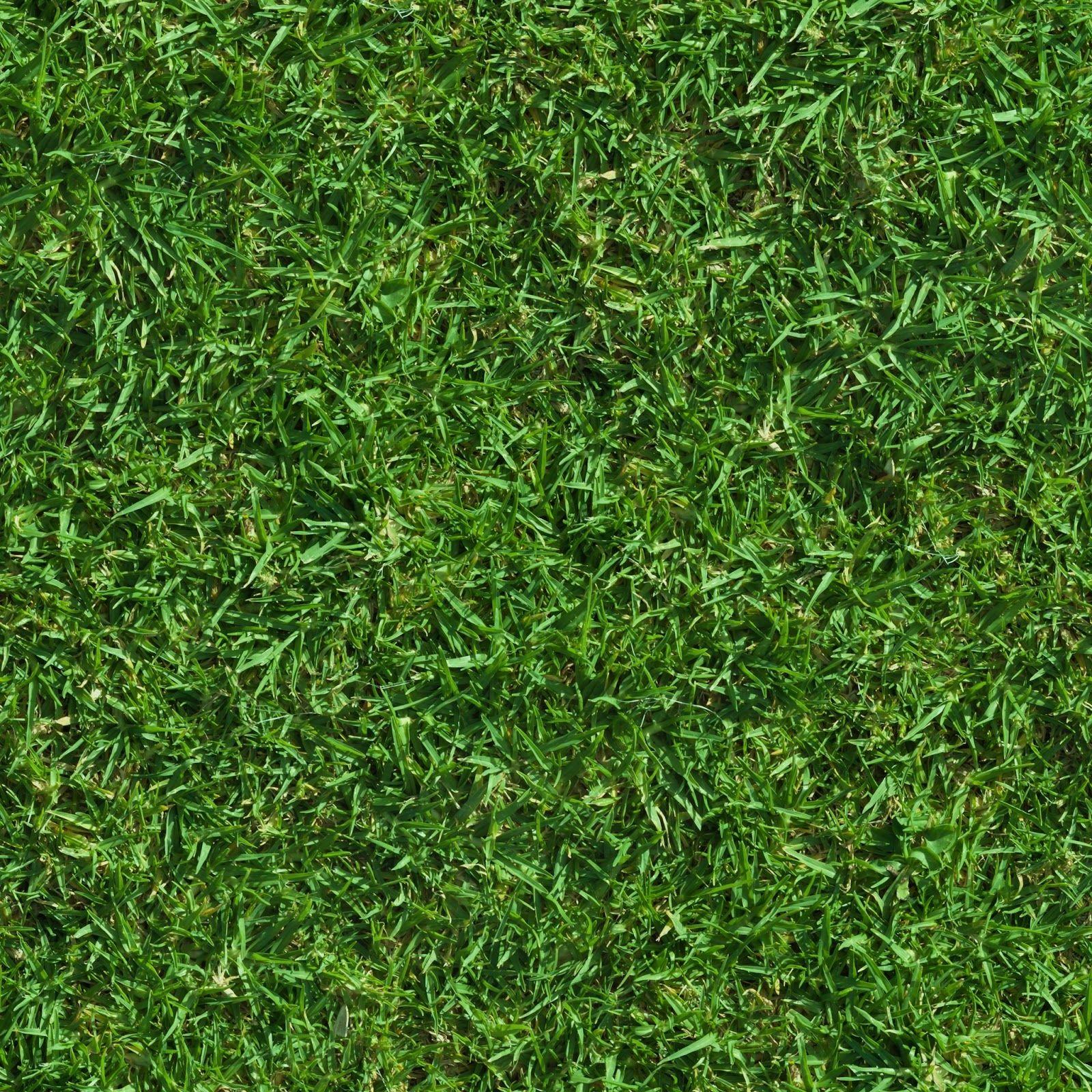 Textures nature elements vegetation dry grass dry grass - Grass Texture 5 Jpg 1600 1600