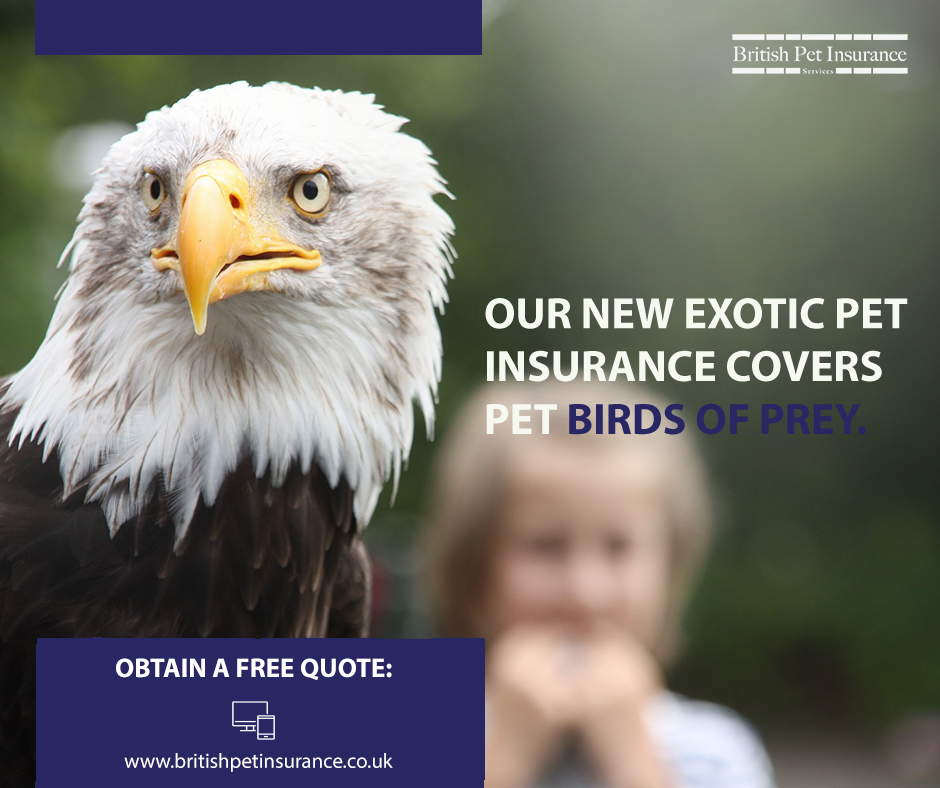 Pin On Everything British Pet Insurance