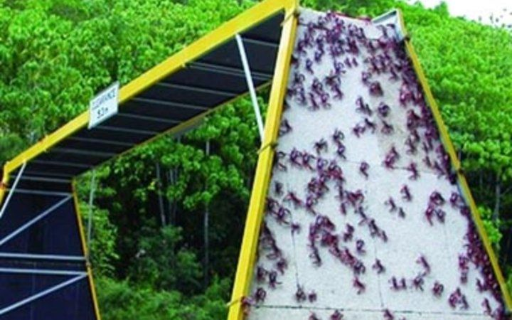 Crab Bridge On Christmas Island Australia Why Did The Cross Road To Get Other Side And Join 120 Million Of His Relatives