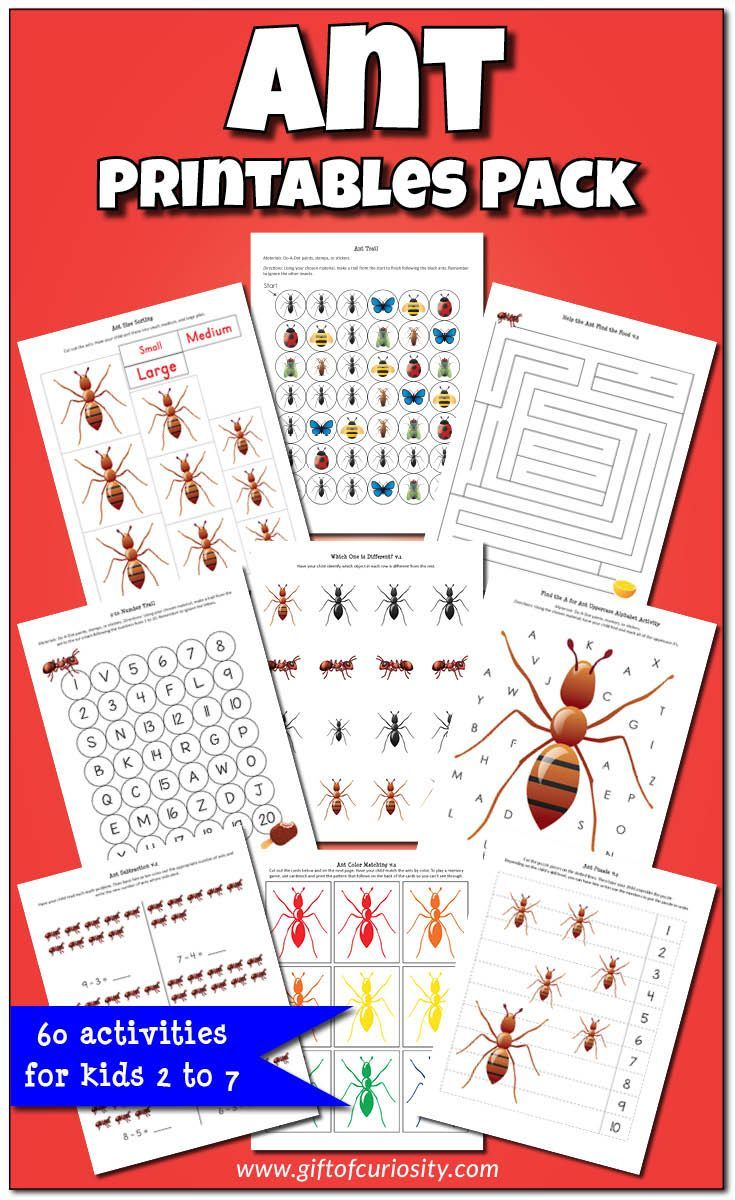 Ant Printables Pack {insect printables} Ants, Insect