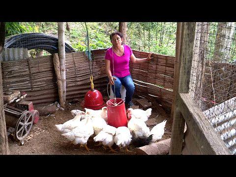 (13) Engorde doméstico de pollos | La Finca de Hoy - YouTube