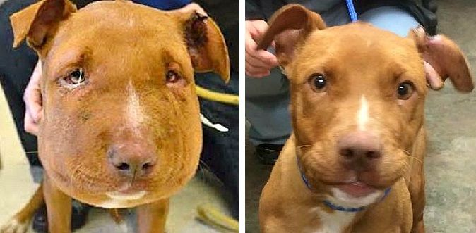 Balloon Faced Puppy Makes Remarkable Recovery Puppies Animal