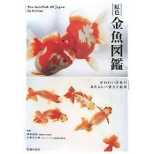 Primary color goldfish kingyo illustrated reference book 255pages primary color goldfish kingyo illustrated reference book 255pages japan new gift negle Images