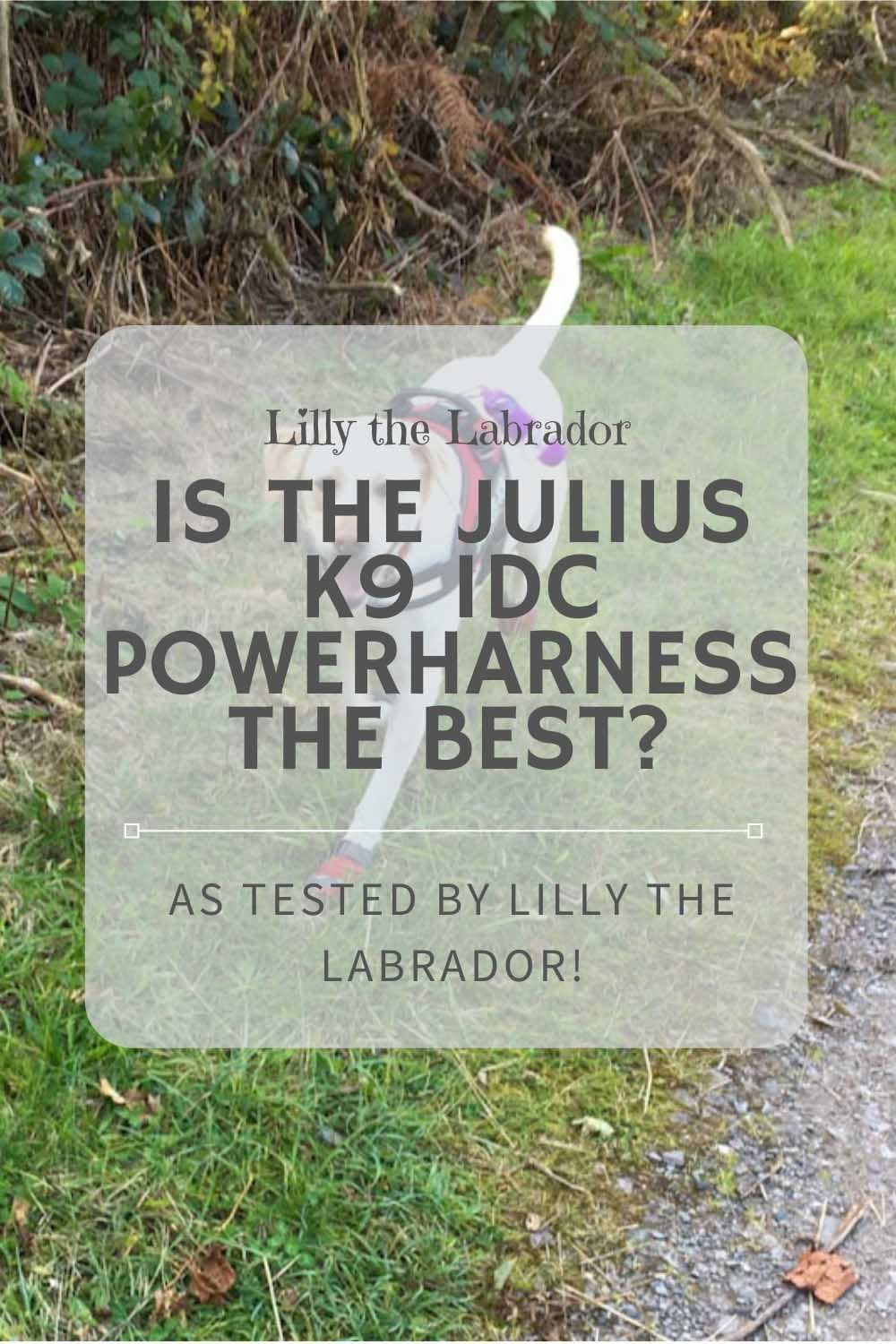 Is The Julius K9 Idc Powerharness The Best Hardness Pinterest In