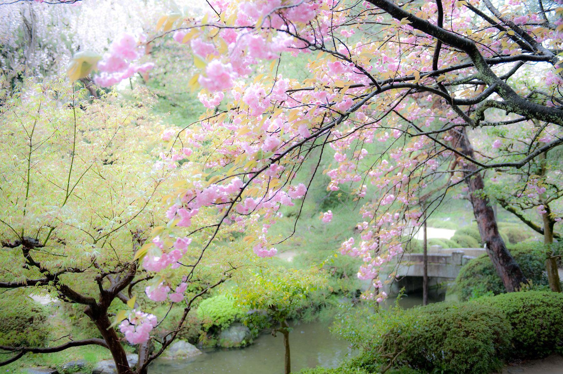 Japanese Cherry Blossom Garden Wallpaper Home Design Ideas Jegygyuru Co Cherry Blossom Wallpaper Japanese Water Gardens Blossom Garden