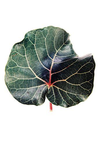 Print collections   grafik botanical color   clintonfriedman   collections