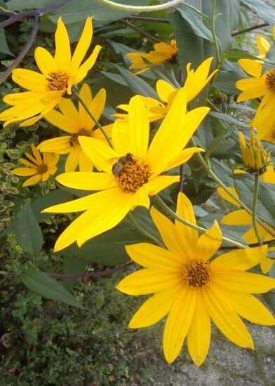 Pflanzen und Blumen die einem vor die Linse kommen