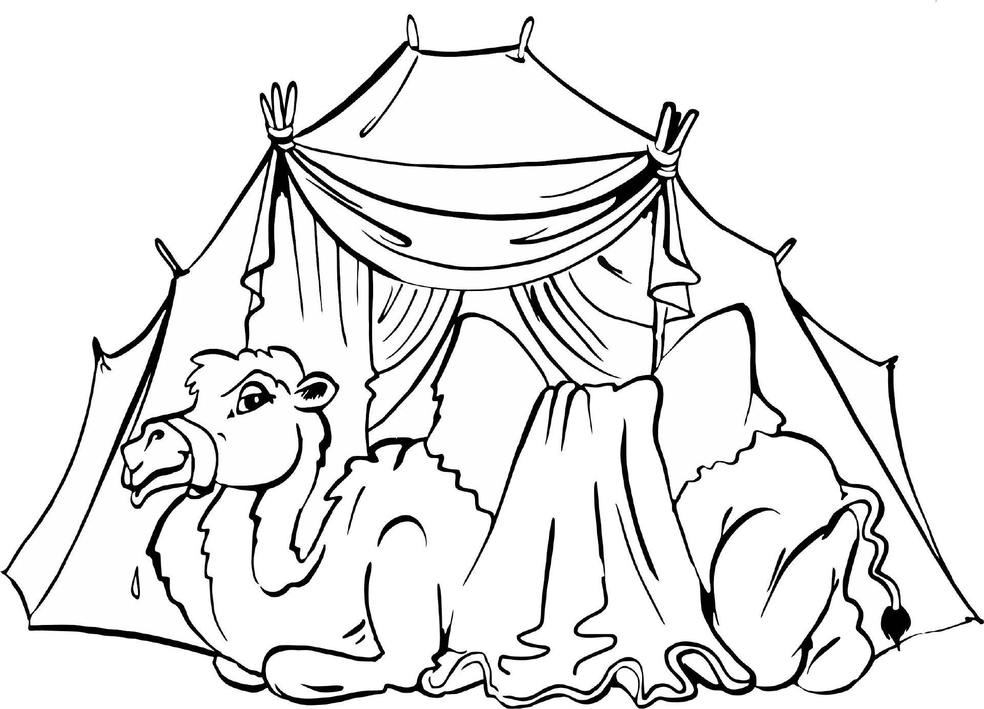 Kamel Vor Zelt Ausmalbilder Biblisch Pinterest Kamel