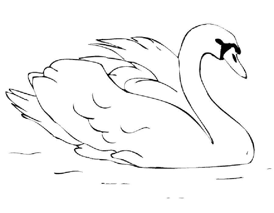 картинки лебедь раскраски резине