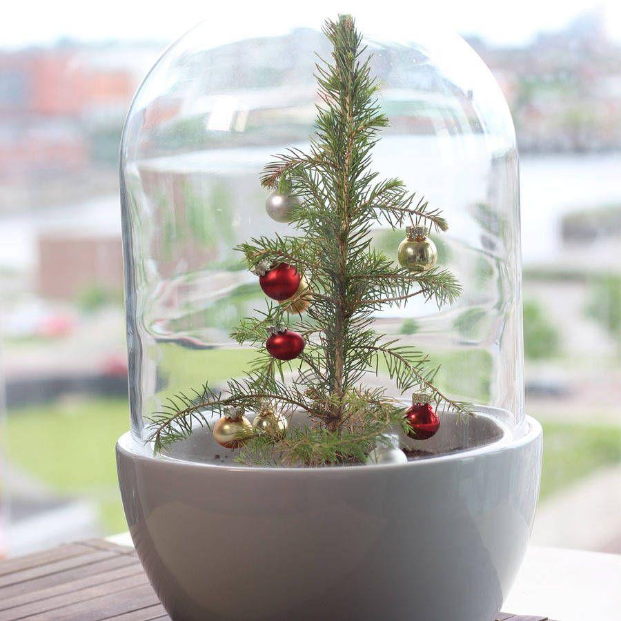 Christmas Tree Terrarium Elegant Christmas Trees Christmas Tree